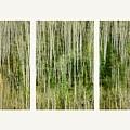 Hillside Forest by Priska Wettstein