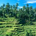 Hillside In Indonesia by Gloria & Richard Maschmeyer - Printscapes