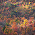 Hillside Rhythm Of Autumn by JW Photography