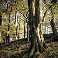 Hillside Trees by Philip Openshaw