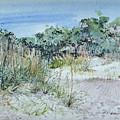 Hilton Head Beach Fauna by P Anthony Visco