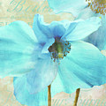 Himalayan Blue Poppy by Mindy Sommers