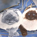 Himalayan Cats  by Debbie LaFrance