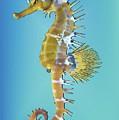 Hippocampus  by Quim Abella