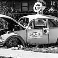 Historic Beetle by Anthony Sacco