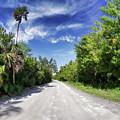 Historic Jungle Trail Vero Bch Fl II by Tina Baxter
