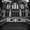 History Museum London by Adrian Evans