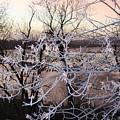 Hoar Frost by Andrea Lawrence