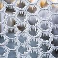 Hoar Frost by Diane Macdonald