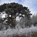 Hoar Frost by Hazy Apple