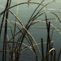 Hoar Frost On Pond 1 by Marilyn Hunt