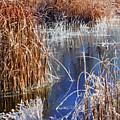 Hoar Frost On Reeds by Marilyn Hunt