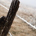 Hoarfrost And Fence by Fred Lassmann