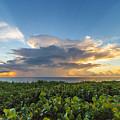 Hobe Sound Beach Sunrise by Joshua Powell