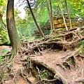 Hocking Hills Ohio Old Man's Gorge Trail by Lisa Wooten