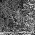 Hoh Rain Forest 3369 by Bob Neiman