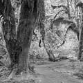 Hoh Rain Forest 3378 by Bob Neiman