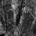 Hoh Rain Forest 3406 by Bob Neiman