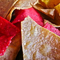 Holiday Chips by Gwyn Newcombe