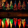 Holiday Evergreen Reflections by Nancy Mueller