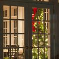 Holiday Lights by Joye Ardyn Durham