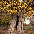 Hollow Tree by Nigel Bangert