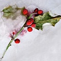 Holly 4 by Margie Hurwich