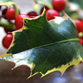 Holly Berries- Photograph By Linda Woods by Linda Woods