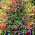 Holly Jolly Tree by John M Bailey