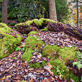 Holly River State Park Rock Garden by Andy Crawford