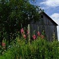 Hollyhock Barn by Michael L Kimble