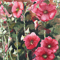 Hollyhocks Along The Fence by Ann Sokolovich