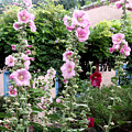 Hollyhocks Taos New Mexico by Wayne Potrafka