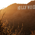 Hollywood by Aurica Voss