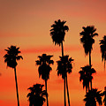 Hollywood Sunset by Mariola Bitner