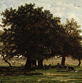 Holm Oaks by Pierre Etienne Theodore Rousseau