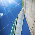 Holo Holo Catamaran Sail Side 2 by Blake Webster