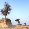 Holy Trees by Joana Kruse