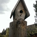 Home For The Birds by LKB Art and Photography