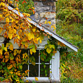 Home In The Fall by Richard Reeve