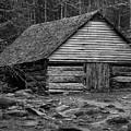 Home In The Woods Bw by Ann Keisling