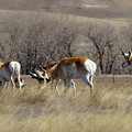 Home On The Range by Jim Garrison