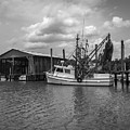 Home Port by Dale Powell