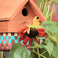 Home Sweet Home by Janet Pugh