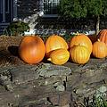 Homegrown Pumpkins by Mary Ann Weger