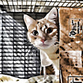 Homeless Cat by Jeelan Clark