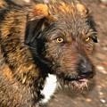 Homeless Dog Charlick by Sergey Lukashin