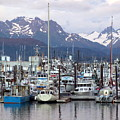 Homer Harbor by Marty Koch