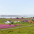 Homes And Flowers On The Atlantic Coast In Gaspe by Les Palenik