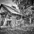 Homestead by Douglas Craig
